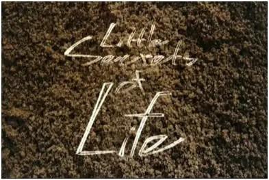 secrets - little secrets of life