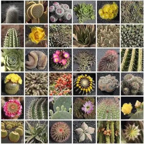 cactus - ¿Qué es un problema para cada persona?