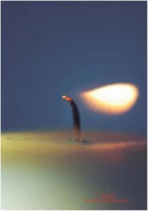 f. aguilar1 - Mis pequeñas reflexiones sobre citas de Paulo Coelho