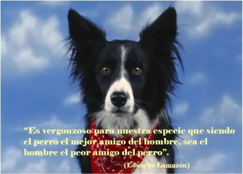 perros21 - Cuento sobre nuestra estima a los animales de Paulo Coelho: ¿Cielo o infierno?
