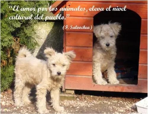 perros31 - perros3