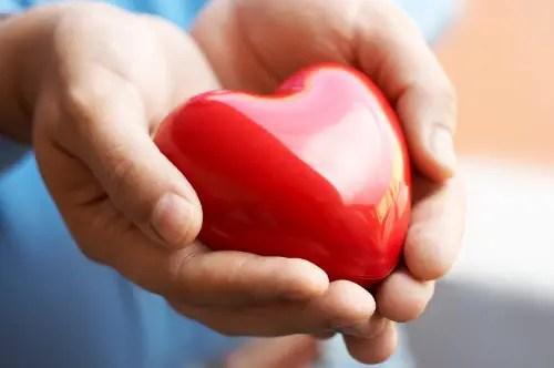 heart in hands - heart in hands