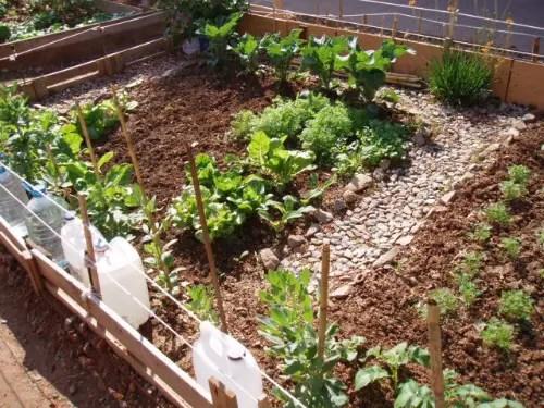 huertos comunitarios- mi balcón verde