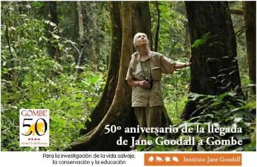 jane31 - Jane Goodall visita España en el 50 aniversario de Gombe