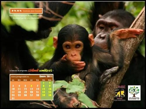 Calendario IJGE ene2011