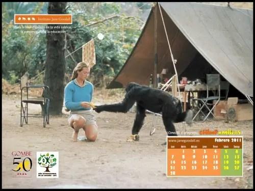 Calendario IJGE feb2011 1024b - Calendario-fondo de escritorio de Jane Goodall: febrero 2011