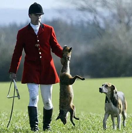 caza del zorro - caza_del_zorro