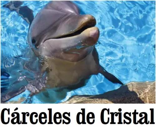 delfines - Defines y cárceles de cristal: Animalis nº 8, periódico en pdf a favor de los animales