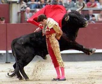 jose tomas manoletina1 - El significado profundo de las tradiciones con animales: zorros, toros, delfines y más