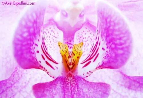cultivar el jardin alex cipollini