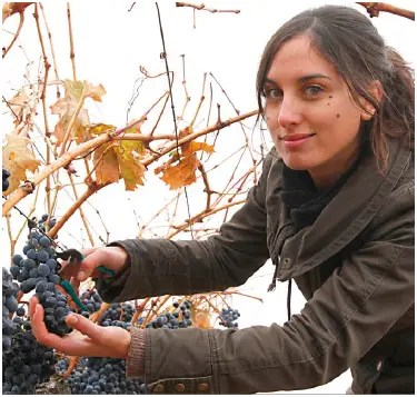 vino2 - vino ecológico triodos bank