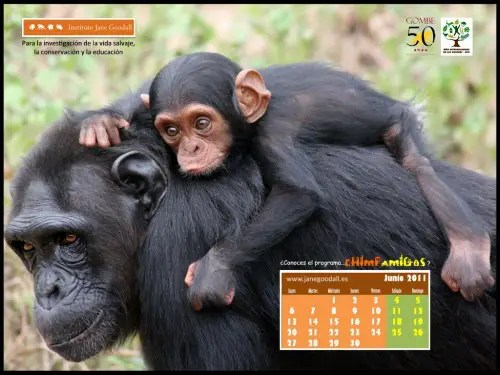 Calendario IJGE jun2011
