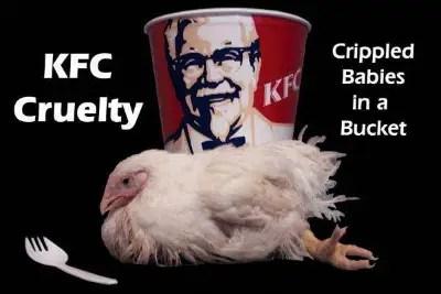 KFC - ¿Por qué no comer perros?