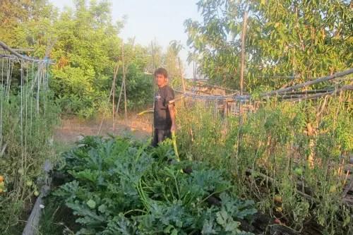 IMG 9620b - Vida y milagros de una familia urbanita viviendo en el campo