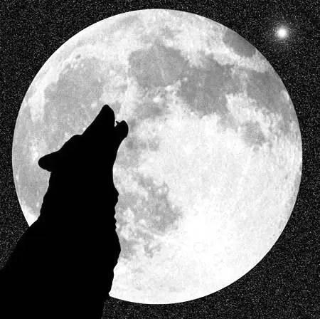 lobo 12297 - Luna de enero: Luna Fría o Luna Lobo