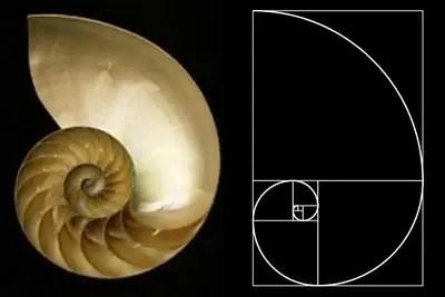 Nautilus4 - Nautilus4