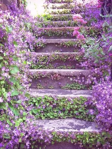 escalera vegetal violeta - escalera vegetal violeta