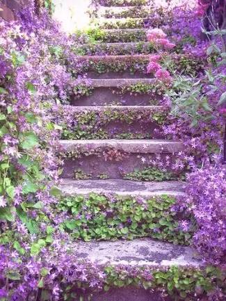 escalera vegetal violeta