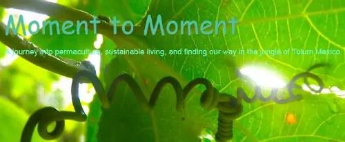 """moment of moment - """"Simplificamos en casi cada aspecto de nuestras vidas y nos enfocamos en lo que realmente nos importaba"""". Entrevista a Jo, artesana alternativa y cosmopolita"""