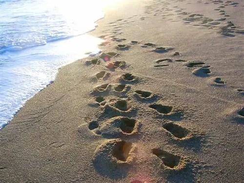 pasos - pasos