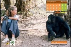 Calendario IJGE abr2011 1024b - Calendario-fondo de escritorio de Jane Goodall: abril 2011
