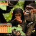 Calendario IJGE ene2011 1024 - Calendario-fondo de escritorio para el ordenador de Jane Goodall: enero 2011