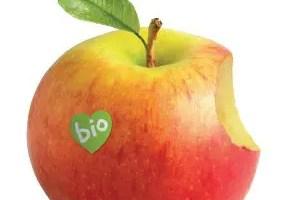 Guia de actividades Biocultura Valencia 2012 - Guía de actividades Biocultura Valencia 2012