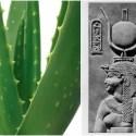 aloevera - ALOE VERA: el secreto de belleza de Cleopatra