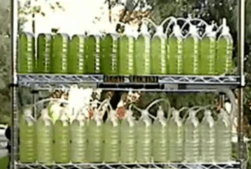 biorreactor con algas - biorreactor con algas