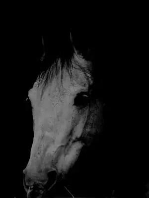 caballo2 - caballo