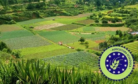cultivos agricultura ecologica -