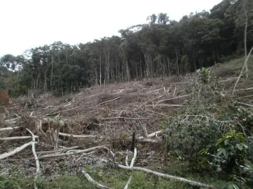 deforestacion -