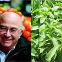 """estevia - """"La gente quiere curarse de una forma natural"""". Entrevista a Josep Pámies, agricultor ecológico y experto en plantas medicinales"""