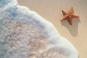 estrella de mar - El esfuerzo personal merece la pena. Cuento de la estrella de mar