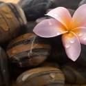 flor piedra - La belleza está en los ojos de quién mira