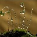 gota de agua - La belleza de una gota de agua