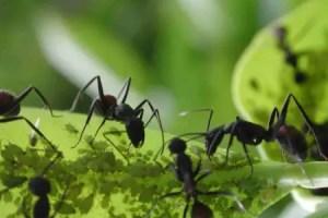 hormigas - Y si las hormigas desaparecen...