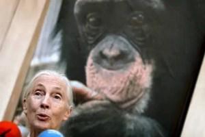 """jane3 - """"Debemos crear líderes más éticos para sobrevivir"""": crónica de la visita de Jane Goodall a España y boletin"""