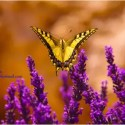 mariposa1 - Proyecto Mariposa: Amor en acción. Iniciativa solidaria para los niños de orfanatos, cárcel y hospital de varias ciudades