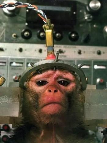 mono maltrato - experimentación animal