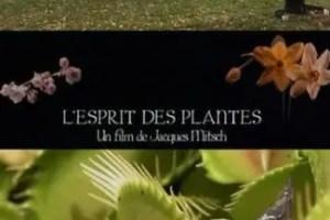 plantas1 - EN LA MENTE DE LAS PLANTAS: documental sobre la inteligencia del mundo vegetal