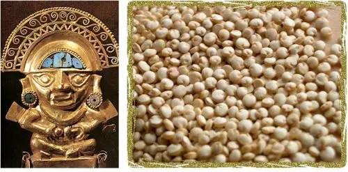 quinoainca - quinoa