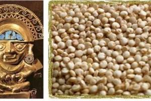 quinoainca - Quinoa: alimento de oro. De los incas a los astronautas