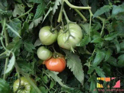tomatehuertalogo -