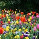 tulipanes - Como ser feliz. La pequeñas cosas que nos hacen más felices