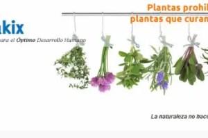 uakix mayo 2012 - Plantas que curan vidas, plantas prohibidas
