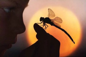 mujerlibelula - Despierta tu poeta interior: llegarás cuando menos me lo espere