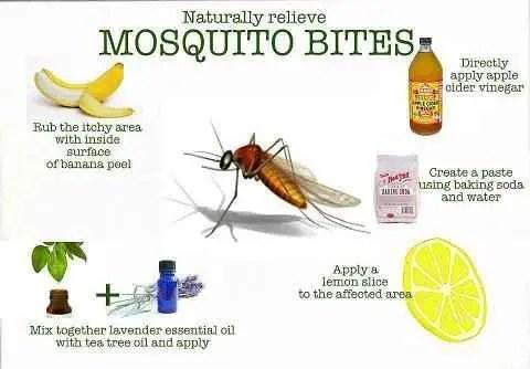 remedios caseros picaduras mosquitos - remedios caseros picaduras mosquitos