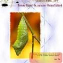brotes - Brotes nº 24: revista online de carácter permacultural