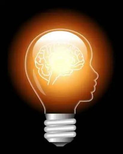 cerebro - cerebro